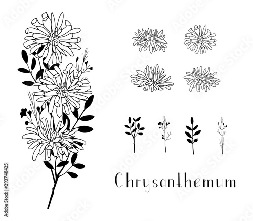 Photo Set of hand drawn chrysanthemum flowers and herbs