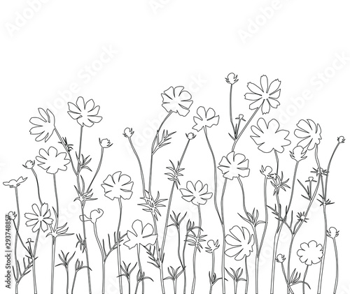 Fotomural  Hand drawing beautiful bouquet of flowers daisy, pen line, floral illustration f