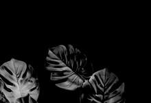 Tropical Black Monstera Palm L...