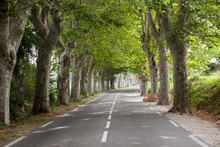 Road With Avenue Trees Near The City Of Apt, Vaucluse, Provence-Alpes-Cote D Azur Region, France, Europe