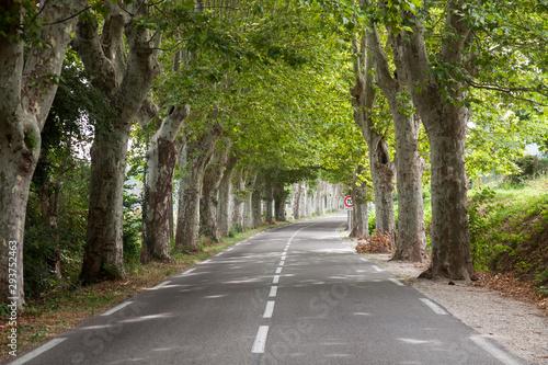 Fotografie, Tablou Road with avenue trees near the city of Apt, Vaucluse, Provence-Alpes-Cote d Azu