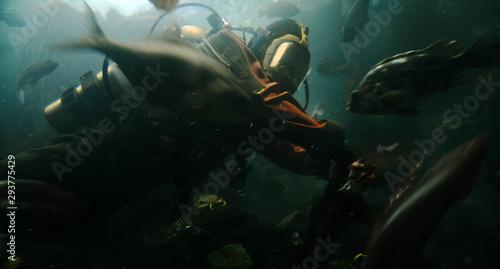 Piranha Attack Diver Fototapeta