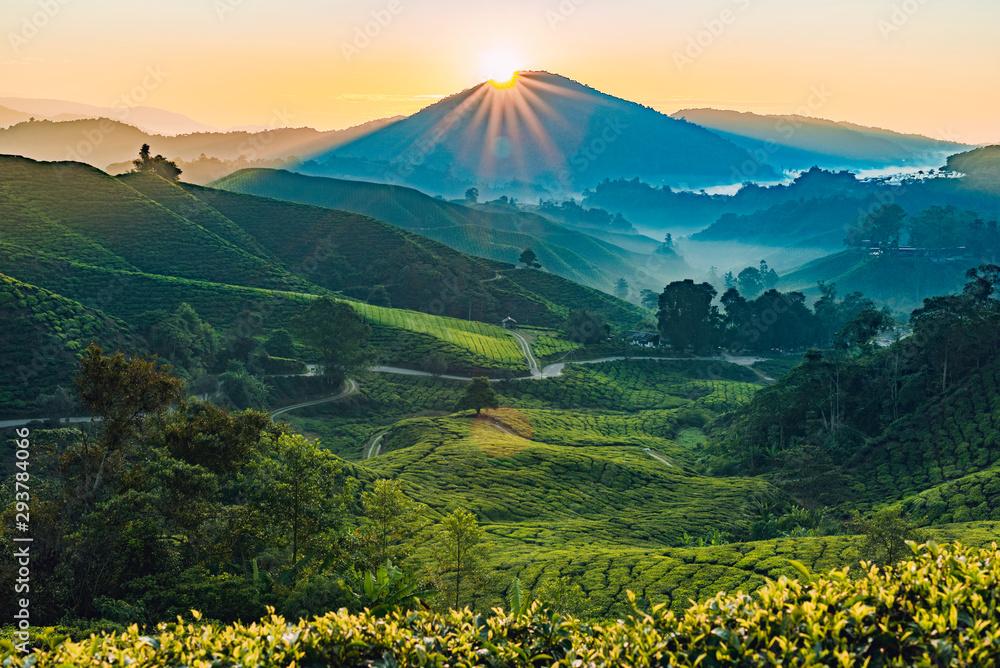 Fototapeta Sunrise of Tea fields in Cameron Highlands, Malaysia