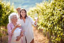 Traditional Countryside Vineyard. Family On Autumn Vineyard Tasting Wine.