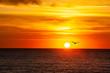 canvas print picture - Schöner Sonnenuntergang über dem Horizont des Ozeans