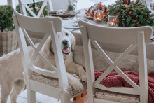 Dog Next To A Beautifully Decorated Christmas Table