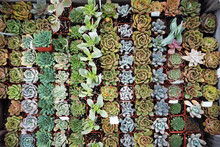 Neatly Organized Succulents On...