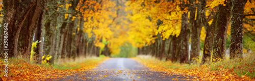 Foto  asphalt road with beautiful trees in autumn