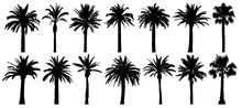 Palm Trees Silhouette. Vector ...