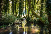 River And Forest On Janjske Otoke Near The Sipovo, Bosnia And Herzegovina