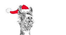 Christmas Llama Wearing Santa Claus Hat In Funny Holiday Illustration, Hand Drawn Cute Animal Cartoon For Holiday Graphic Art Clip Art Designs