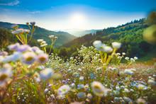 Serene Flower Field Landscape ...