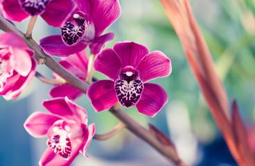 Phalaenopsis orchid macro