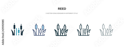 Fotografie, Obraz reed icon in different style vector illustration