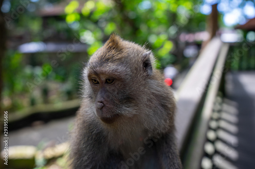 Monkey in forest Canvas Print