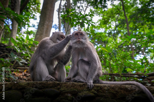 Photo Monkeys grooming