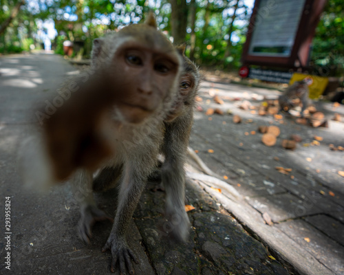 Canvas Print Monkey in forest