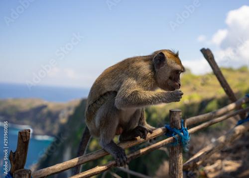 Monkey on fence Wallpaper Mural