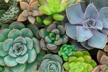 Top View Of Various Succulent ...