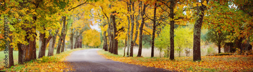 Keuken foto achterwand Bomen asphalt road with beautiful trees in autumn