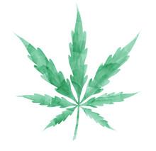 Watercolor Marijuana Leaf Isol...