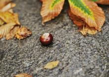 The Autumn Leaves On Asphalt With Raindrops.