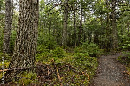 Fototapeta The Forest of Kejimkujik National Park in Nova Scotia Canada