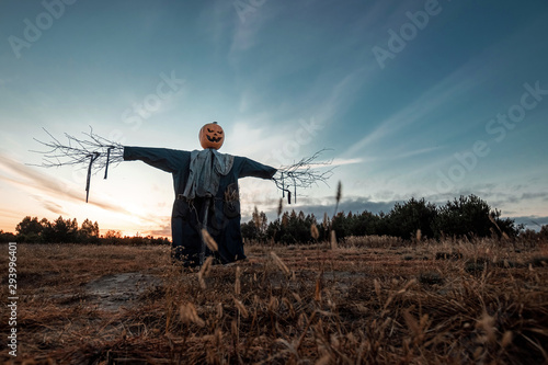 Stampa su Tela Scary scarecrow with a halloween pumpkin head in a field at sunset