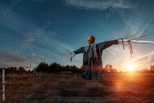 Fototapeta Scary scarecrow with a halloween pumpkin head in a field at sunset