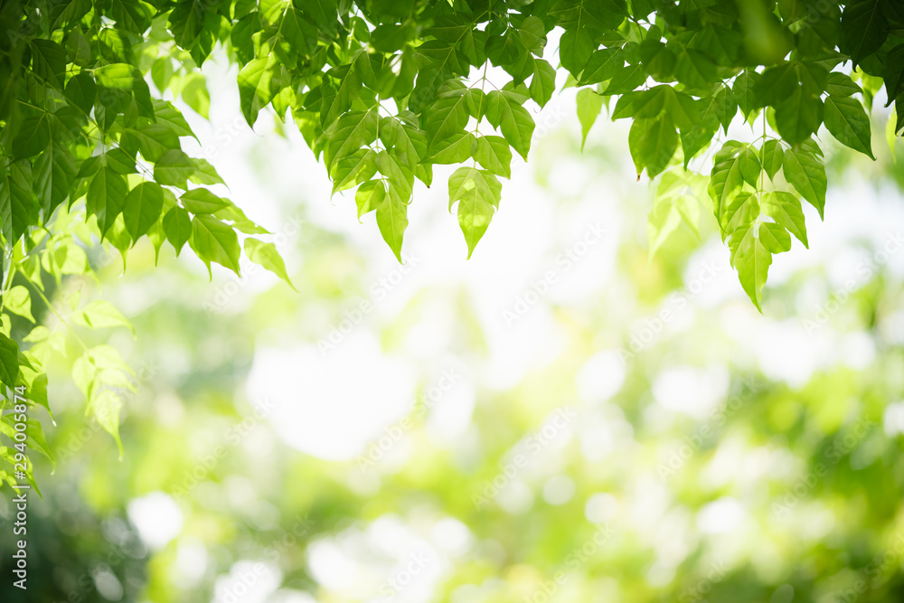 Fototapeta Green leaf on blurred greenery background. Beautiful leaf texture in nature. Natural background. close-up of macro with free space for text..