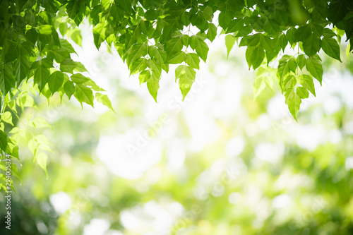 Canvas Prints Trees Green leaf on blurred greenery background. Beautiful leaf texture in nature. Natural background. close-up of macro with free space for text..