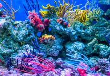 Coral Reef Aquarium Tank For B...