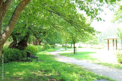 Obraz na plátně 公園
