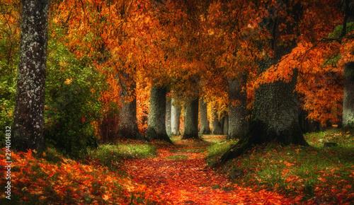 Photo sur Toile Route dans la forêt autumn path