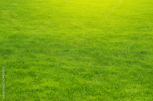 Foto auf AluDibond Lime grun Mowed green lawn. Landscaping. Grass