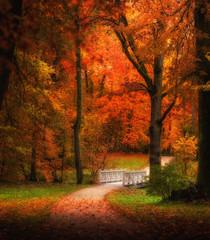 Panel Szklany Las autumn forest