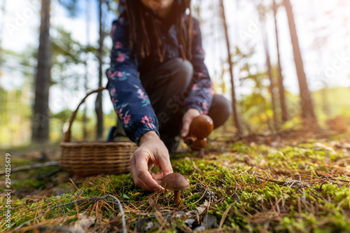 Fototapeta Woman picking mushroom in the forest obraz