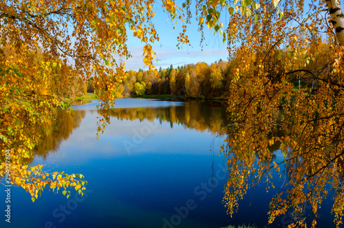 Fototapety, obrazy: Beautiful sunny autumn landscape with pond in park and trees with yellow autumnal foliage