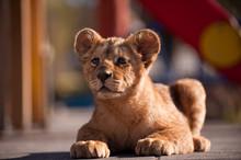 Portrait Of Beautiful Little Lion Cub In Zoo