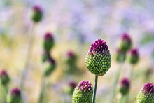 Beautiful Purple Green Bloomin...