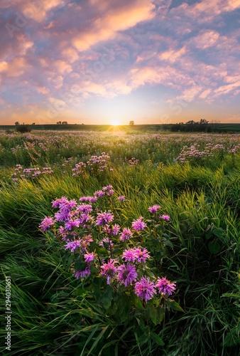 pole-fioletowych-dzikich-kwiatow-w