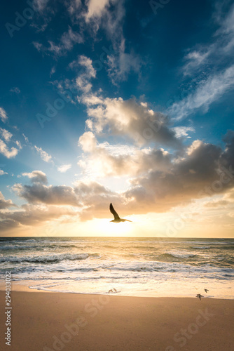sunset on the beach with a bird flying by