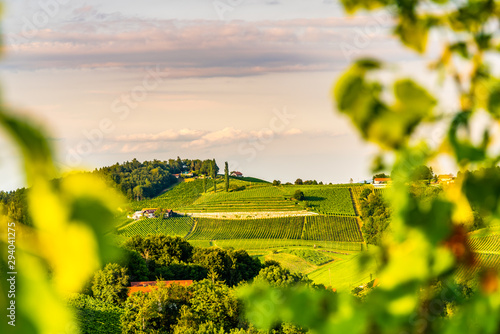 Foto auf Gartenposter Gelb View from famous wine street in south styria, Austria on tuscany like vineyard hills. Tourist destination