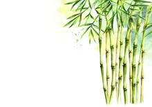 Green Bamboo Background, Stems...