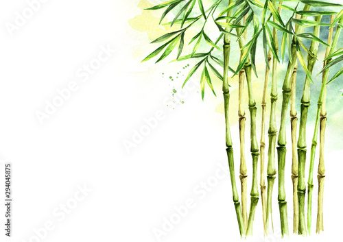 Green bamboo background, stems and leaves, Asian rainforest Canvas Print