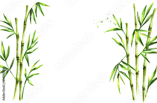 Green bamboo background, stems and leaves, Asian rainforest. Watercolor hand drawn  isolated illustration