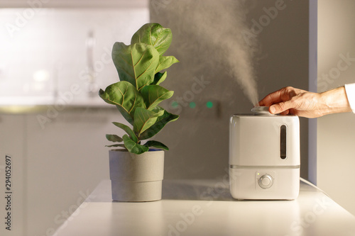Deurstickers Planten Hand turn on air humidifier on the table at home, water steam direction to a houseplant - Ficus lyrata. Ultrasonic technology, comfortable living conditions, moisture increase in the apartment.
