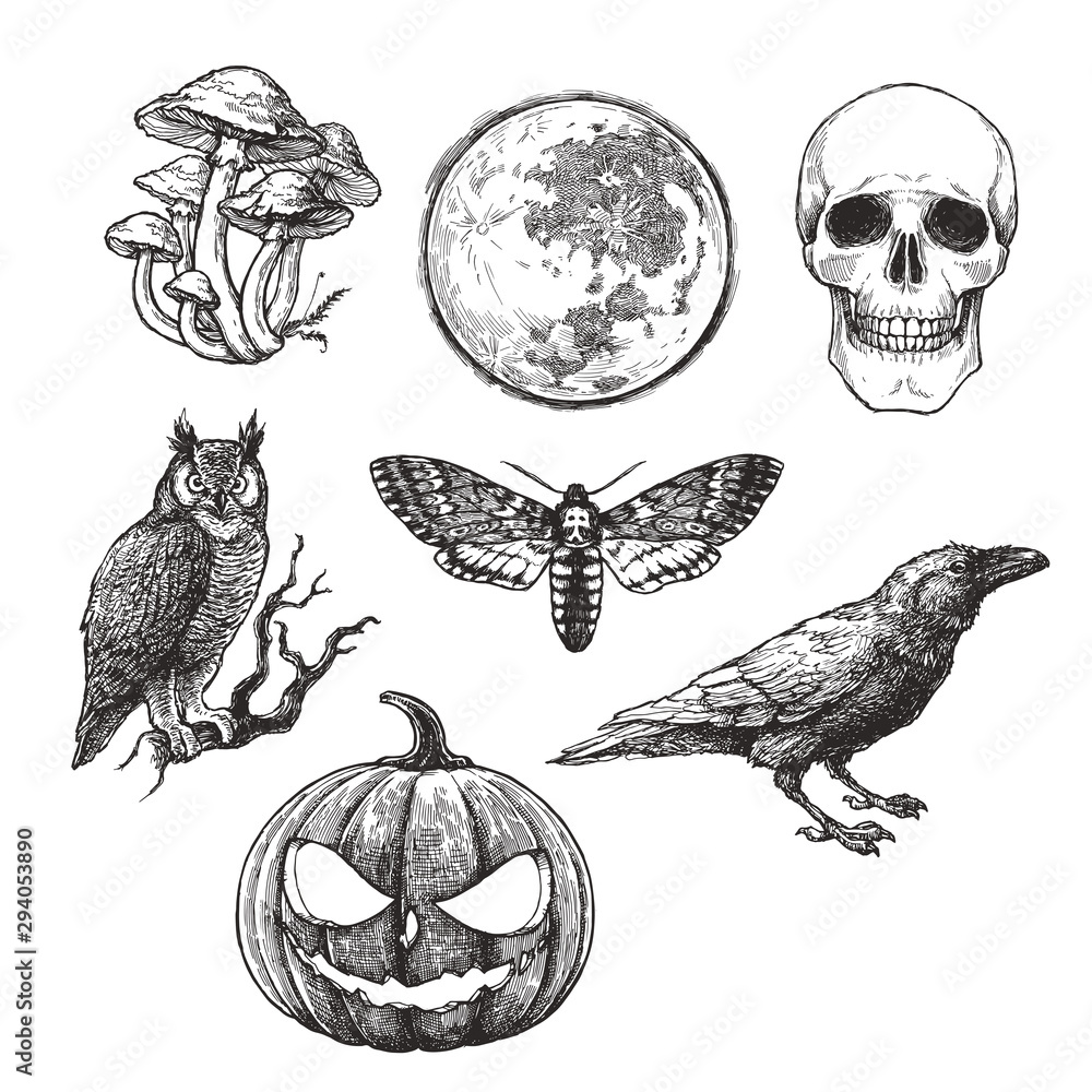 Fototapeta Vector vintage set of Halloween symbols in engraving style. Hand drawn illustration with skull, pumpkin, full moon, raven, death head moth and owl isolated on white