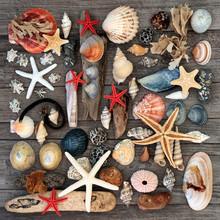 Driftwood, Seashells, Pebbles ...