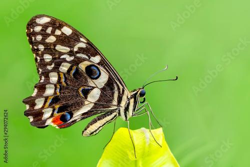 Foto auf Leinwand Schmetterling Macro Butterfly wing background